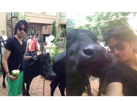 Kishan Kanhaiya Cast To Shoot With A Buffalo On Th