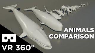 Animal Size Comparison VR 360
