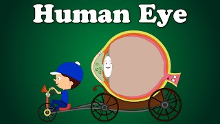 CH06-SENSORY SYSTEMS-PART04-THE EYE02