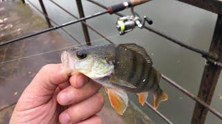 Рыбалка на реке северка в голубиному