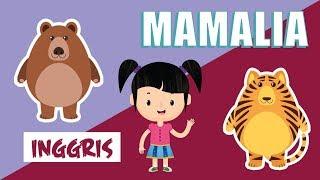 Belajar Mengenal Nama-nama Hewan Mamalia dalam Bahasa Inggris Bagian 2 | Bunbun Learning Mammals
