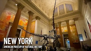 American Museum of Natural History Walking Tour - Dinosaurs, Whale and Animals - Inside Look AMNH