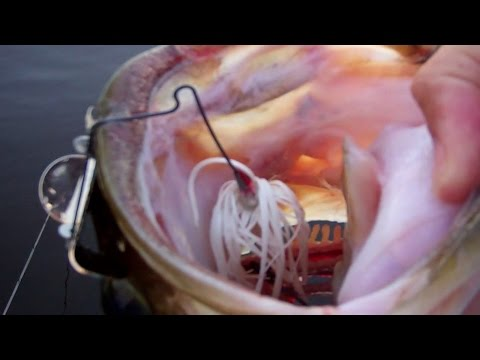 Explosive Buzzbait Hits! Topwater Buzzbait Bass Fishing