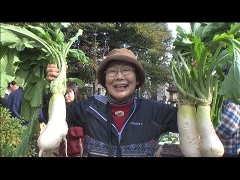 復活!江戸野菜 品川カブ品評会