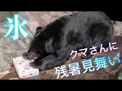【残暑見舞い】クマさんに好物いっぱいの氷をあげてみた!