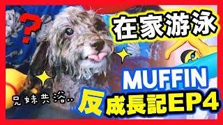 【🐶MUFFIN「反」成長記#4】和狗狗在「家中游泳」🏊🏻♀️?享受還是會逃走?😂(中字)