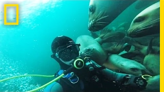 Dive With Dozens of Playful Sea Lions | National Geographic