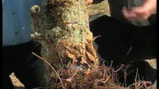How To Keep Your Tree From Dying