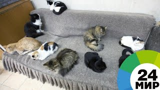 «Кошачий дедушка» покорил соцсети - МИР 24