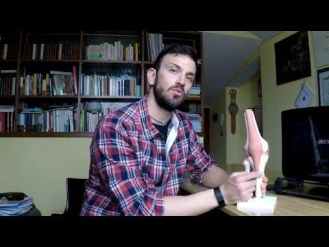 Nel dolore articolazioni delle dita