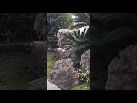 Японский сад в санатории Айвазовское. Партенит