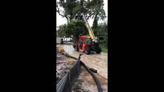 Planting Palms Rain or Shine