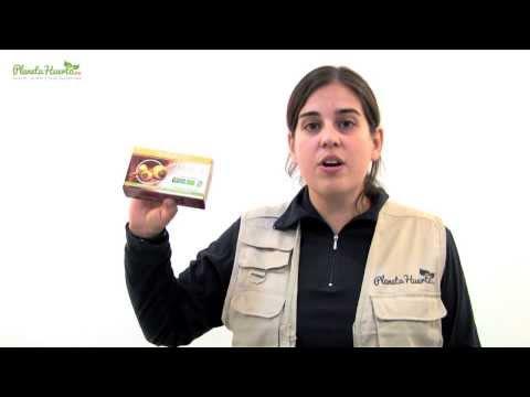 Cápsulas Maca Andina Biológico 500 mg, Marnys, 60 ud