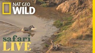 Epic Video: Zebra Narrowly Escapes Crocodile, Runs...