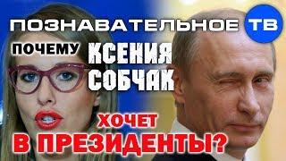 Почему Собчак хочет в президенты? (Познавательное ТВ, Артём Войтенков)