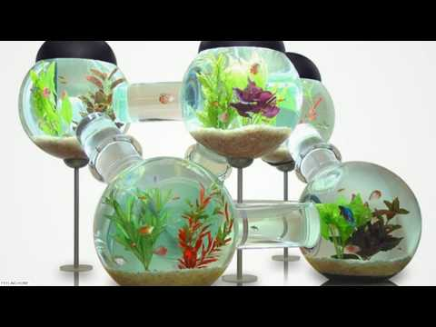 ☑️ UPDATE 2018: 40 Amazing Aquarium Fish Ideas 2018 – Creative Home Design Fish Tank and Colors
