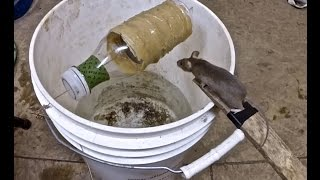 Best Mouse Trap Ever (So Simple)
