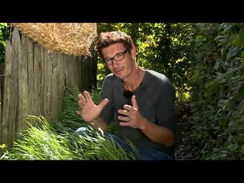 Gräser - Top Auswahl für den Garten