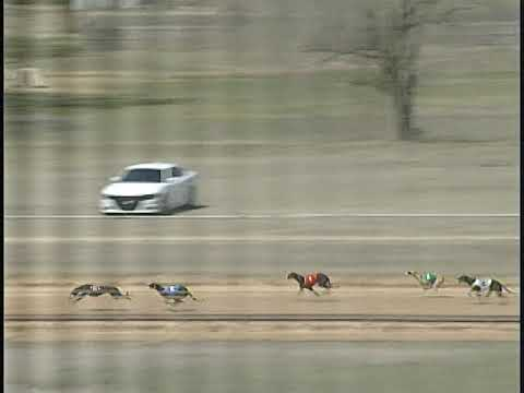 Race 53