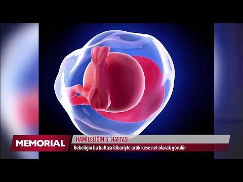 5 haftalık gebelik döneminde neler oluyor?