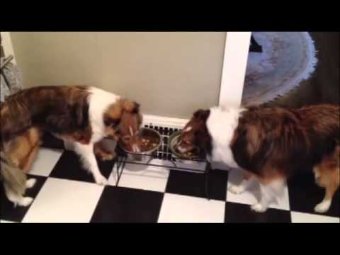Indy & Tulla Demonstrate Self Control