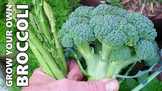 How to Grow & Harvest Broccoli