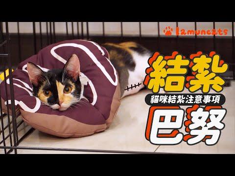 貓咪能結紮還是先結?