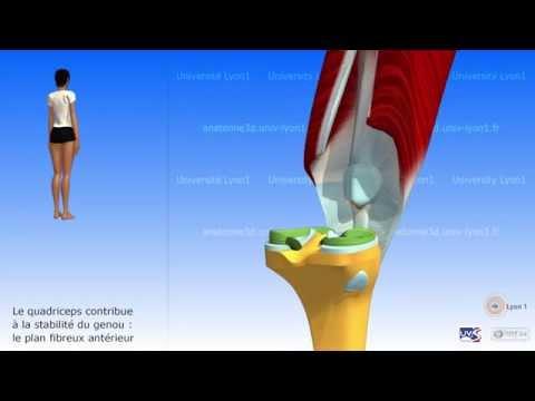 De la distension des ligaments et les muscles de la main le traitement