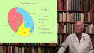 Lecture 8. The Thalamus Structure, Function and Dysfunction