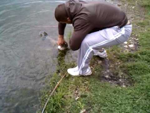 Pond Fishing for Catfish