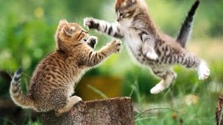 Драка котов! Замедленная съемка! Cats Fight!  Slow Motion!!