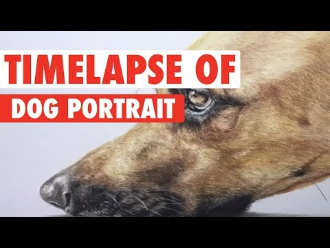 Amazing Time Lapse Portrait of Dog