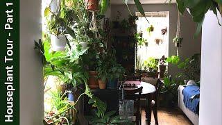 Houseplant Tour (350+ Plants)   Summer 2019   Part 1 - Kitchen/Living Room