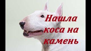 Росгвардеец ножом остановил агрессию бойцового пса