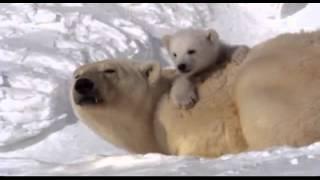 La Tierra,  pelicula de nuestro planeta. Documental - Video Youtube