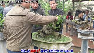 Giao dịch Phôi Sanh quá nhiều sau buổi khai mạc tl Văn Giang.