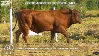 Coro 2396 b4 fiv