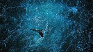 Planet Ocean (Planète Océan) - Trailer