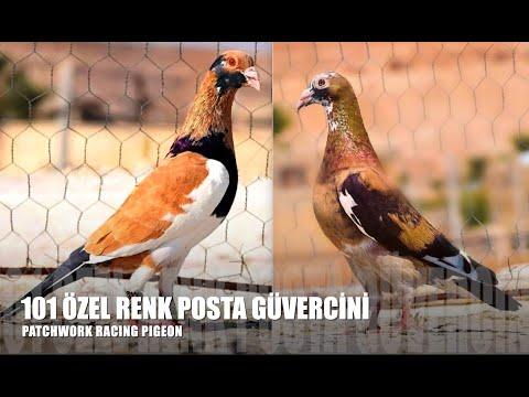 , title : 'Özel Renkli Posta Güvercinleri