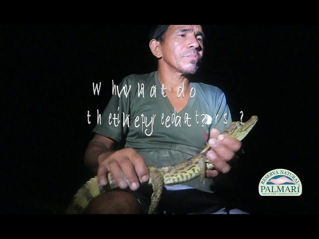CAIMANS & CROCKS – CATCH & RELEASE AT THE RESERVA NATURAL PALMARI