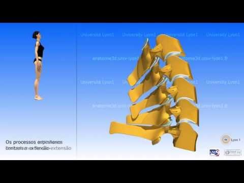 Coluna cervical e movilidade da reglao cervical