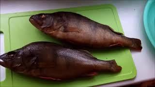 Температурный режим для рыбы в витринах