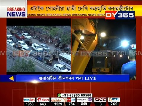 Elephant at G.S Road || Latest update