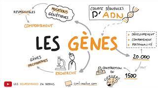 Vignette de [VIDÉO] LES GÈNES - Les neurosciences en dessins