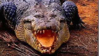 Deadly Crocodiles of the Nile River - Nature Documentary