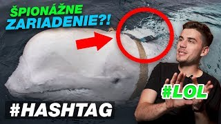 Vycvičili špionážnu veľrybu... | HASHTAG #23
