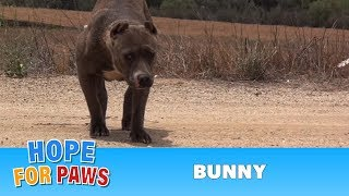 Download Youtube: Rescuing a scared stranded Pit Bull who was struggling to survive.  Please share.