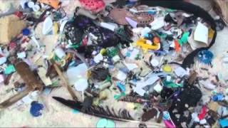 Christmas Island Community Cleans Up  Most Polluted Beach in Australia..to save endangered turtles.