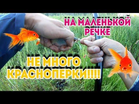 МАЛЕНЬКАЯ РЕЧКА СРЕДИ БОЛОТ!!!!КРАСНОПЕРКА КЛЮЕТ!!!