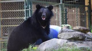 The bears you saved in 2017